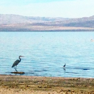 A 2015 file photo from the shores of the Salton Sea.